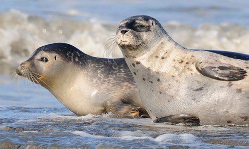 Zeehonden---zeehonden